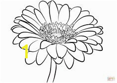 gerber daisy coloring pages 40