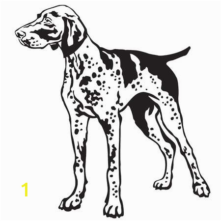 stock vector decorative portrait of standing in profile german shorthaired pointer vector isolated illustration i
