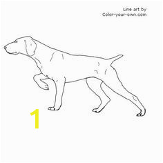 German Shorthaired Pointer Coloring Page 10 Best Search Images