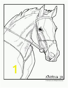 d6cc439efb49dd8d51fa051fefbf3837 horse coloring pages coloring pages to print