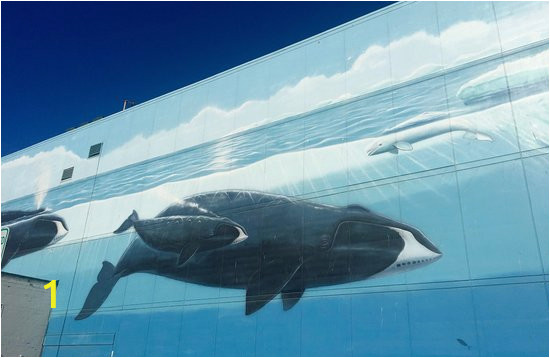 whale wall downtown anchorage