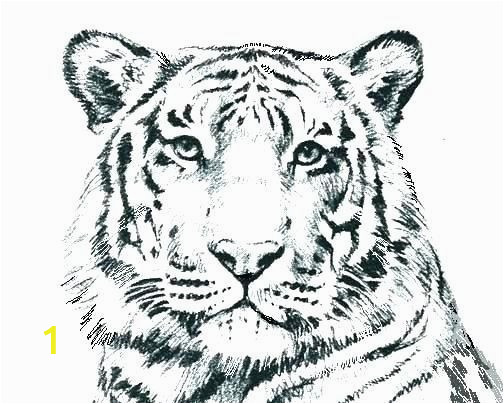 tiger coloring in pages lovely wild cat coloring pages g4674 realistic cat coloring pages of tiger coloring in pages
