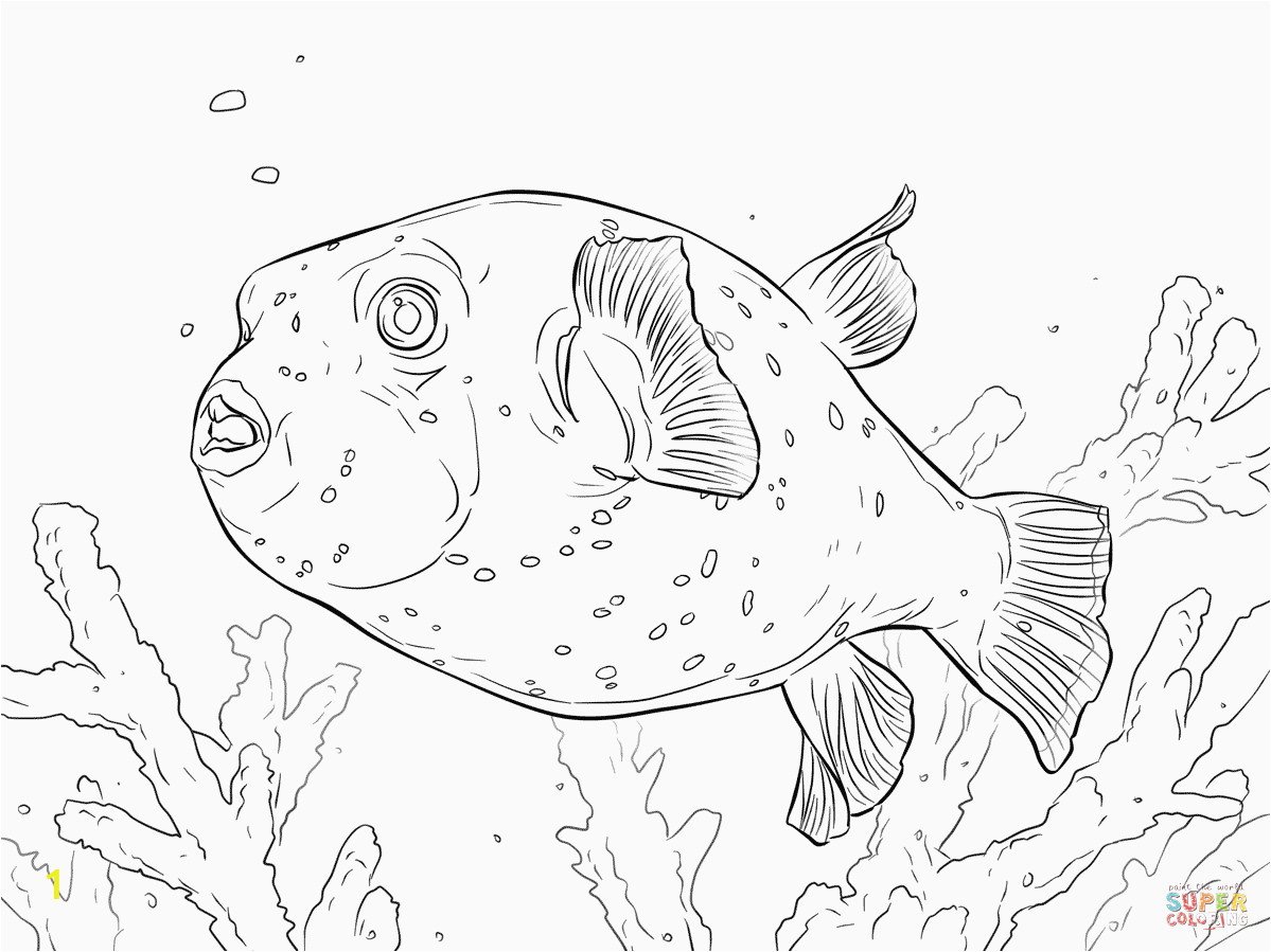puffer fish coloring page awesome puffer fish coloring pages of puffer fish coloring page