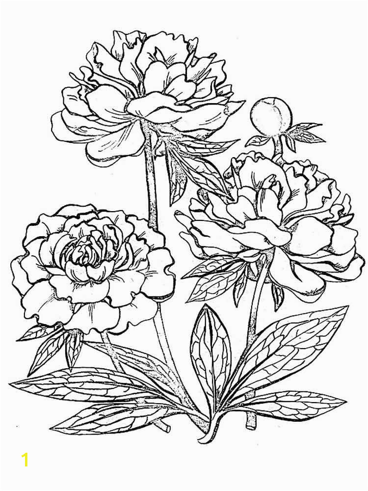 Realistic Flower Coloring Pages | divyajanani.org