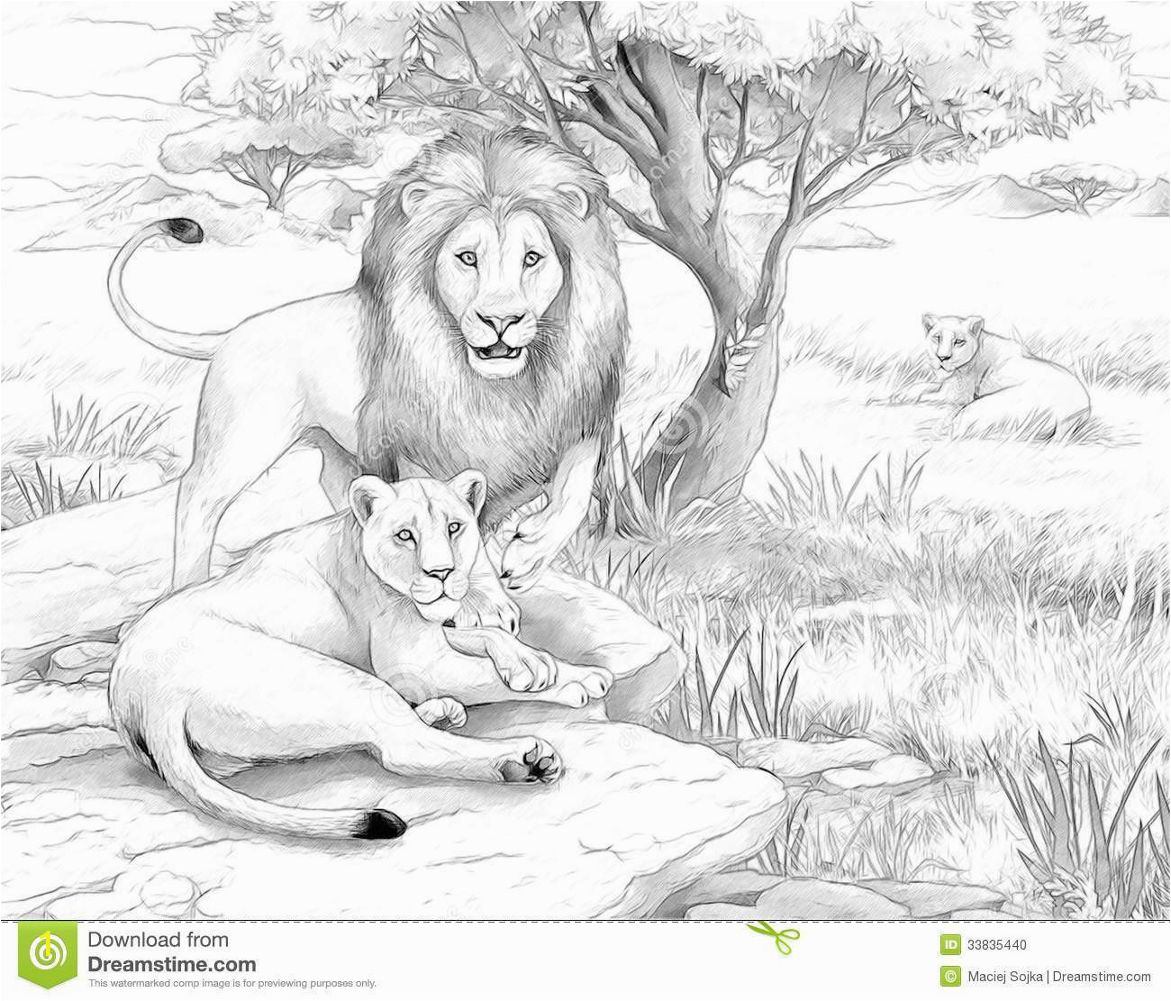 f619bc760bc498ac0d1c edcea84 now printable lion pictures real animals coloring pages for kids 1300 1111