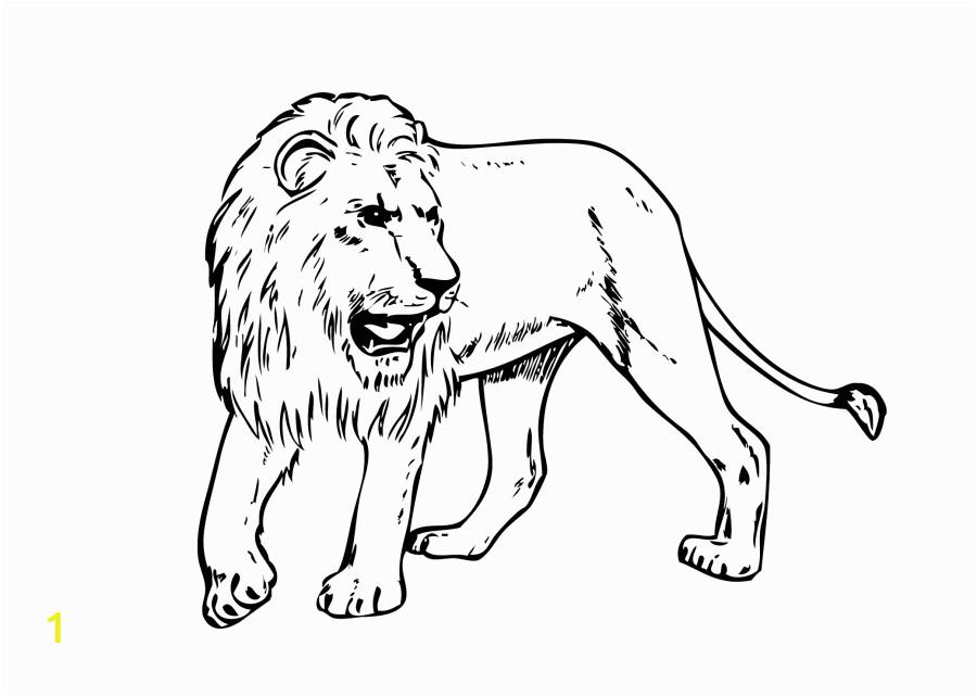 Realistic Lion Coloring Pages Lion Free Pritout
