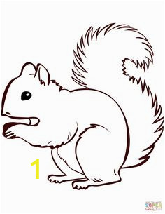cfc24ae81cf91ab9412ed eeb9a5 squirrels coloring pages