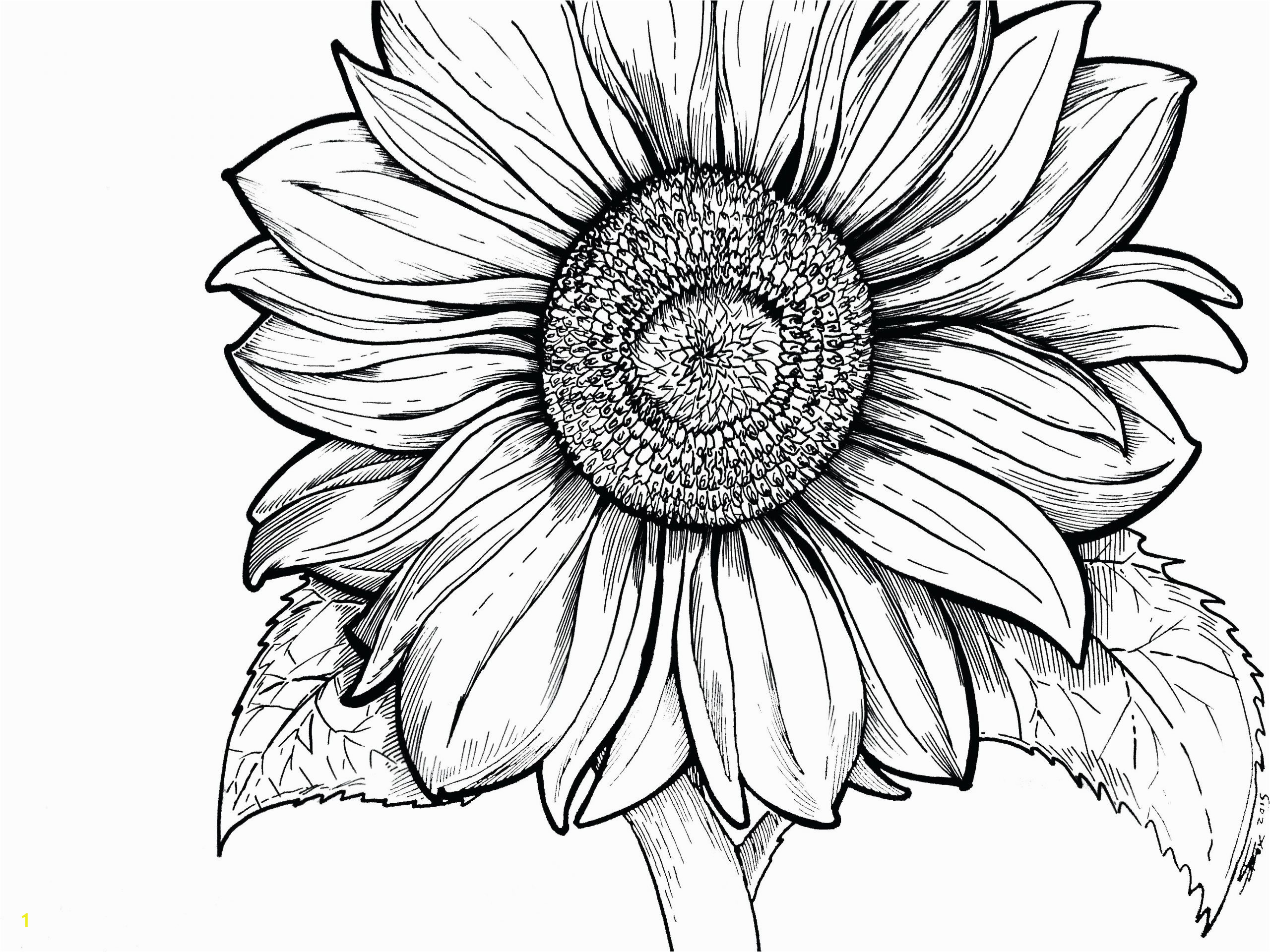 sunflower coloring page survival sheet odd sheets for young adults color pages free christmas to print scaled