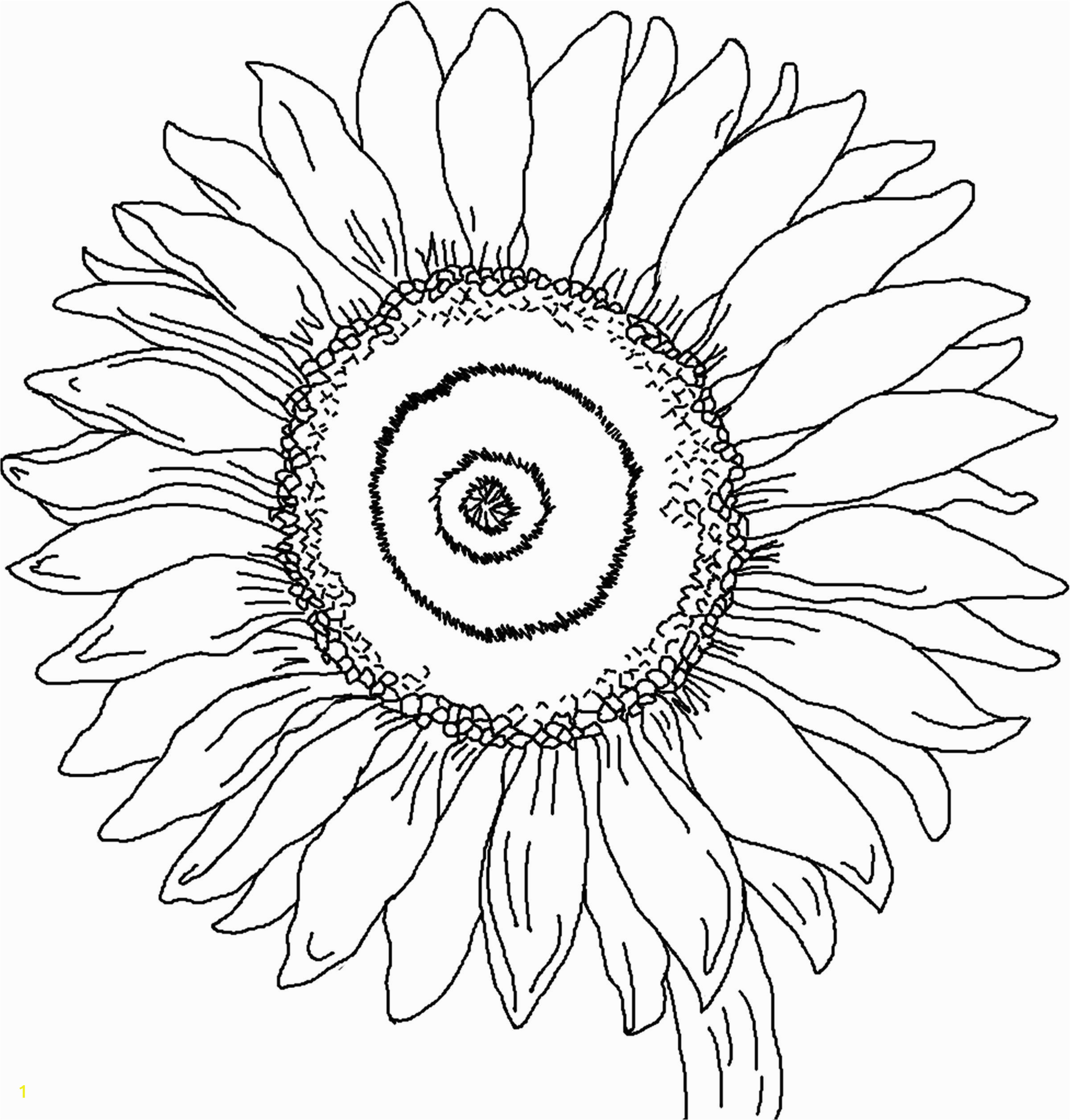 Realistic Sunflower Coloring Page Sunflower Coloring Page for Kindergarten