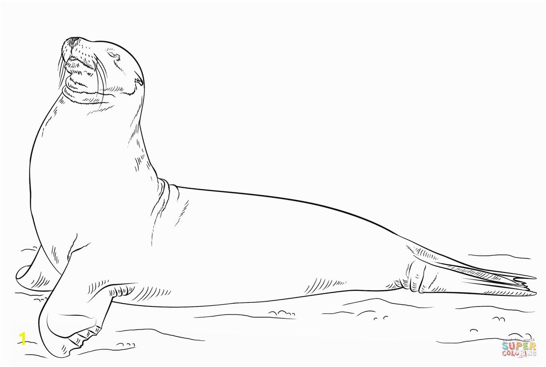 7a9fca df6edd7a11d5fd galapagos sea lion posing coloring page free printable coloring 1228 824