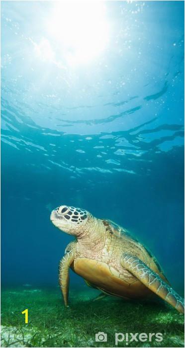 wall murals sea turtle deep underwater