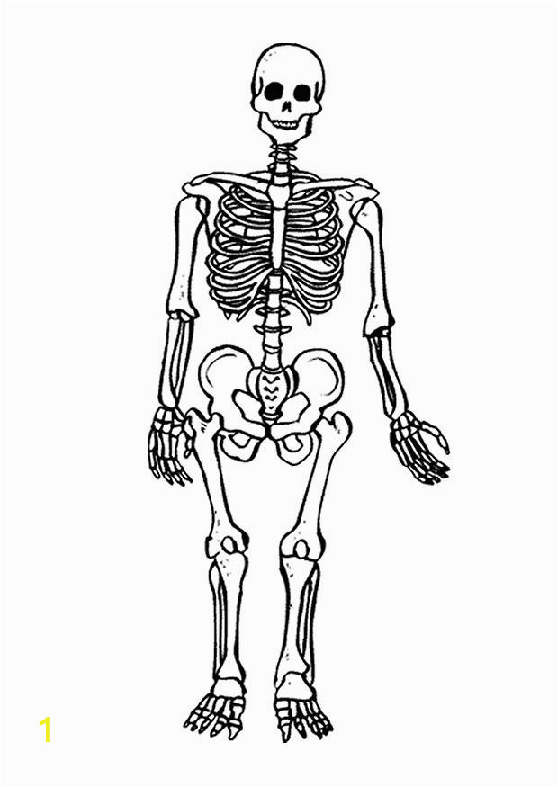 Skeleton Coloring Page for Kids Free Printable Skeleton Coloring Pages for Kids