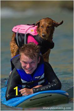 1b44b969a274cbf845b8591d4c0733b8 rescue dogs animal rescue
