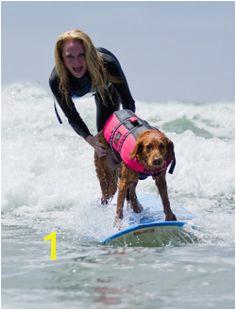 d9a462d44b d5cb e7 surfers unusual animals