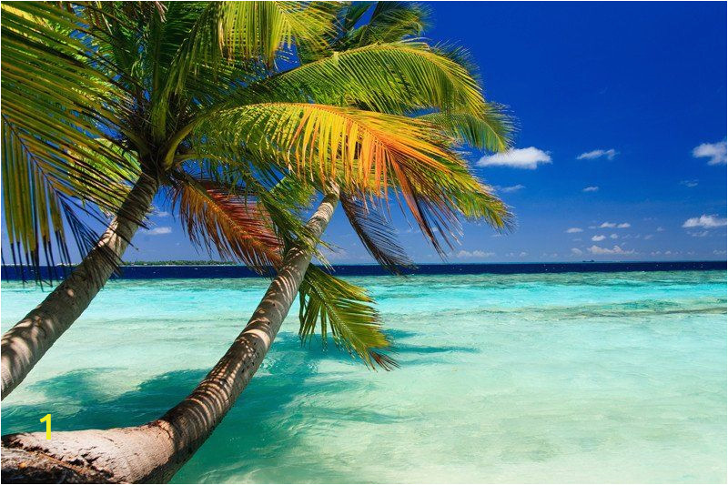 Tropical Beach Wall Mural Tropical Beach Wall Mural