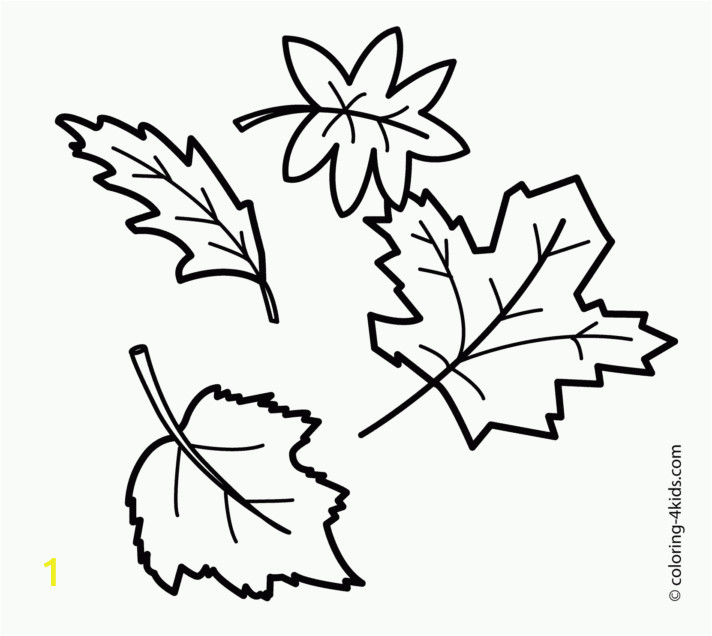 fall leaves coloring pages page photosintable free of stunning leaf to print photos pinnate cottonwood tree coconut types three clover willow tulip elm nettle different 712x636