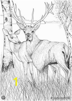 a ad35eade4fed1f15a04 coloring for adults adult coloring pages