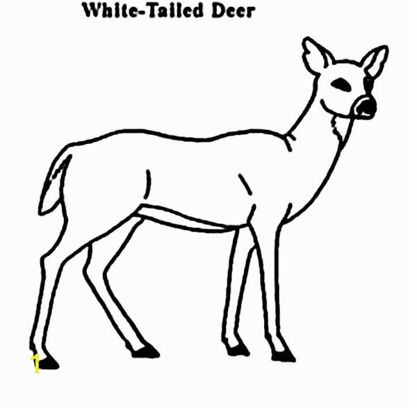 32c62ff21d1dbcdc d d7388 coloring pages of whitetail deer key deer coloring pages john 600 587