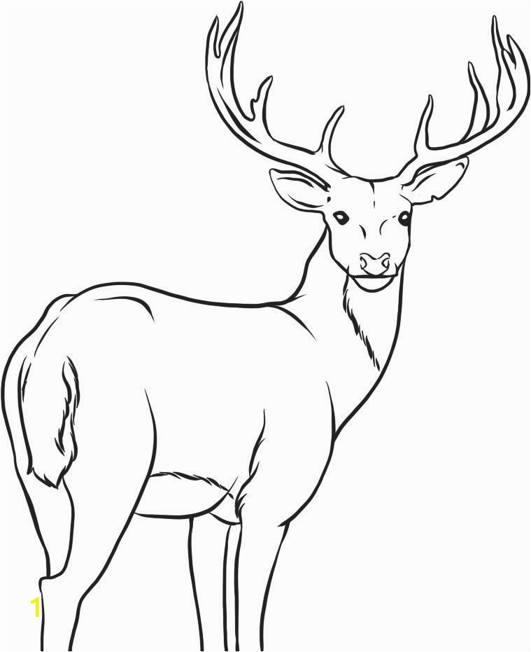 deer clipart colored pencil 8