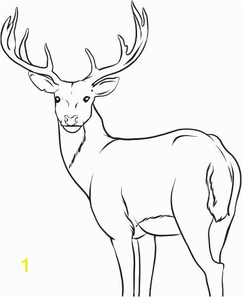 baby deer coloring pages 19