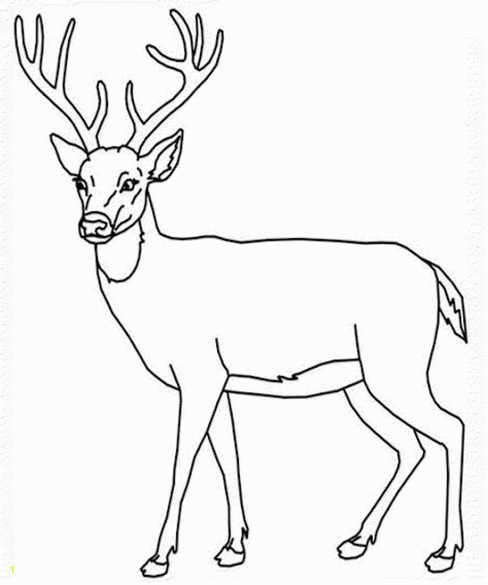 whitetail deer drawing 17