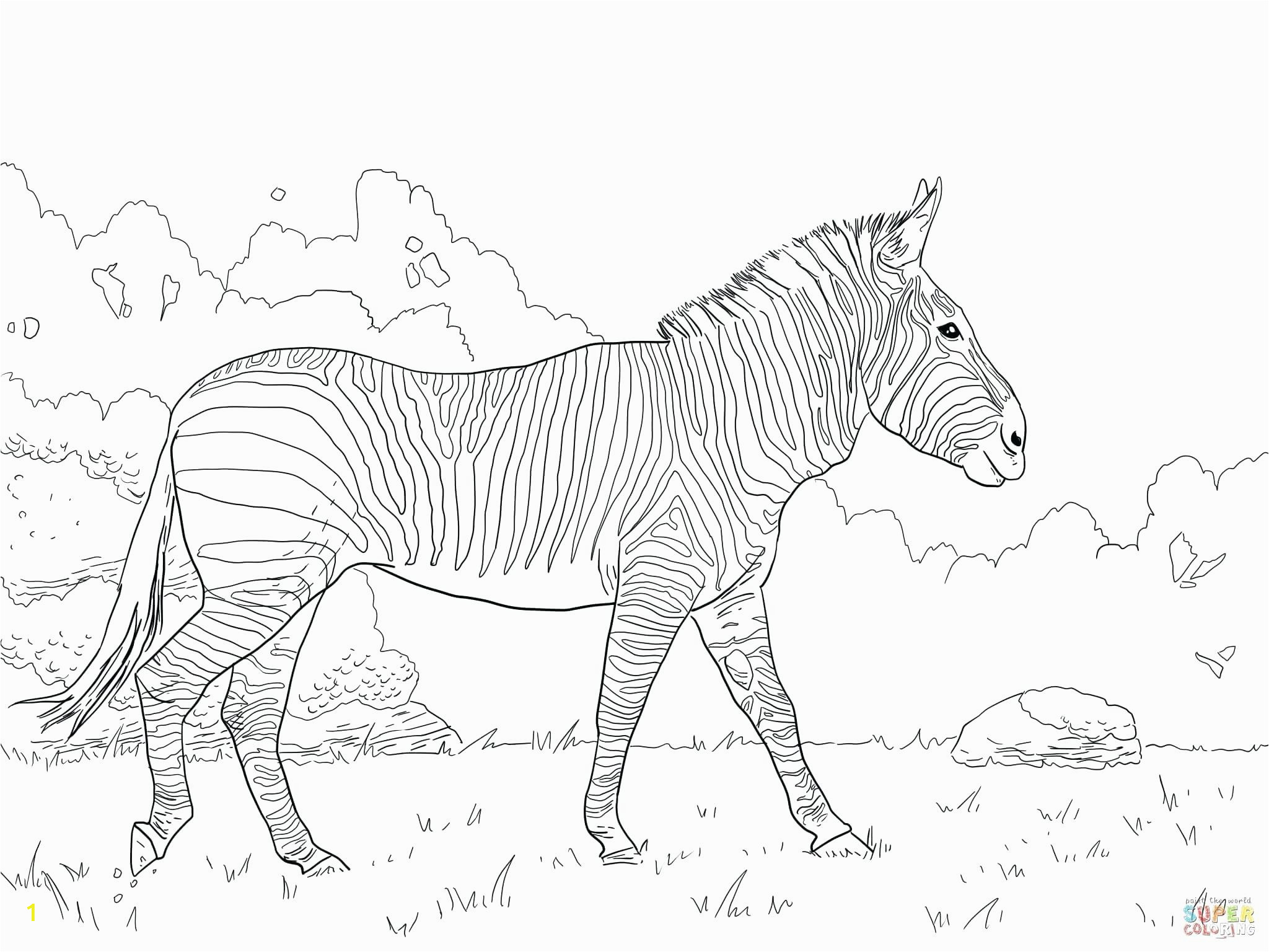 zebra animals u printable unique coloring pages for kids realistic adult books ssmotors co secret garden stress relief color by number mandala book flowers disney