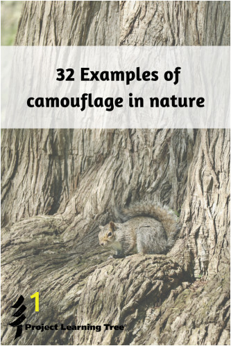 camouflage in nature 333x500