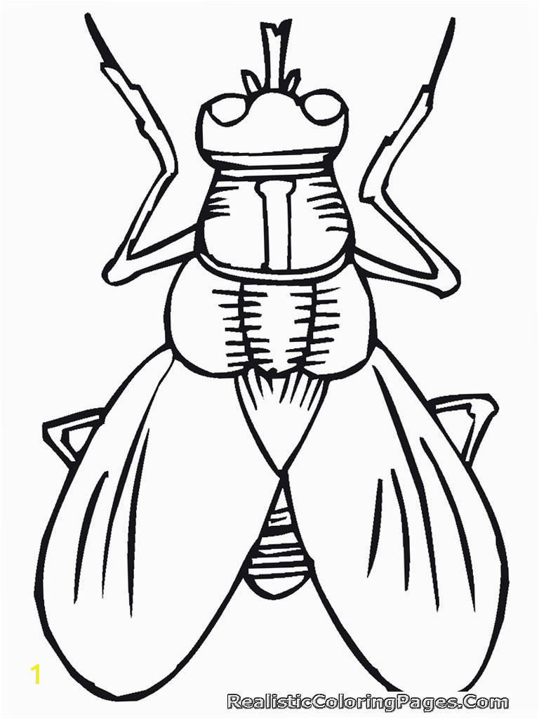 Free Printable Insect Coloring Pages Cartoon Insect Coloring Pages with Images