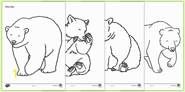 T T 2045 Bears Colouring Sheets ver 3