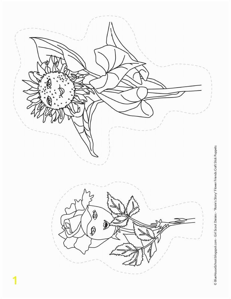 unique daisy flower garden journey