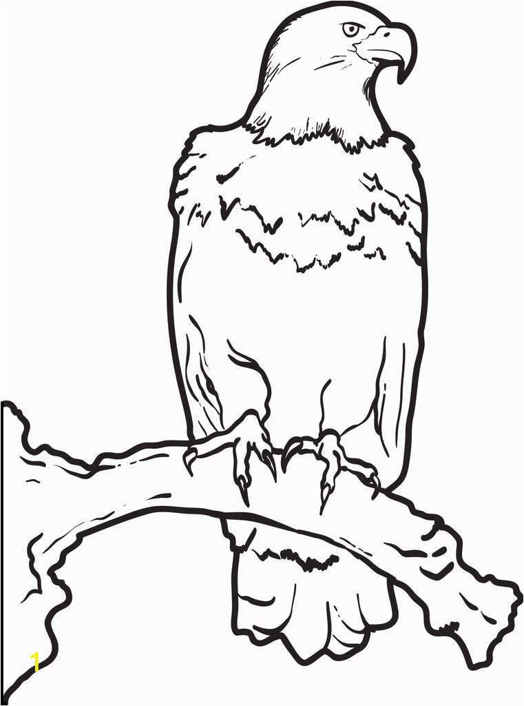bald eagle coloring page a4375