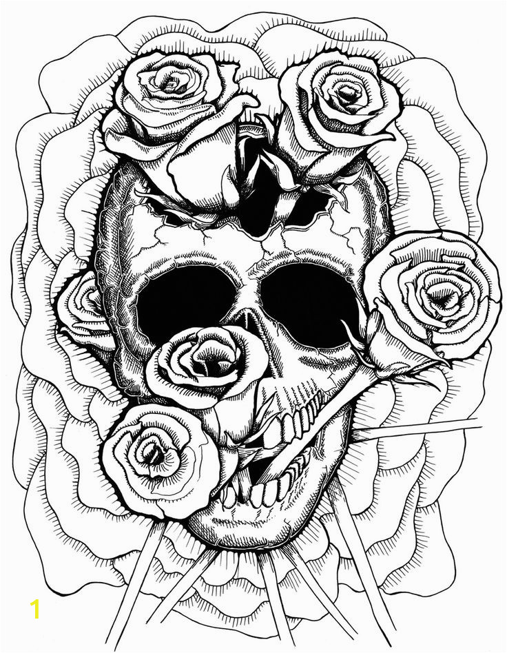 detailed skull drawing