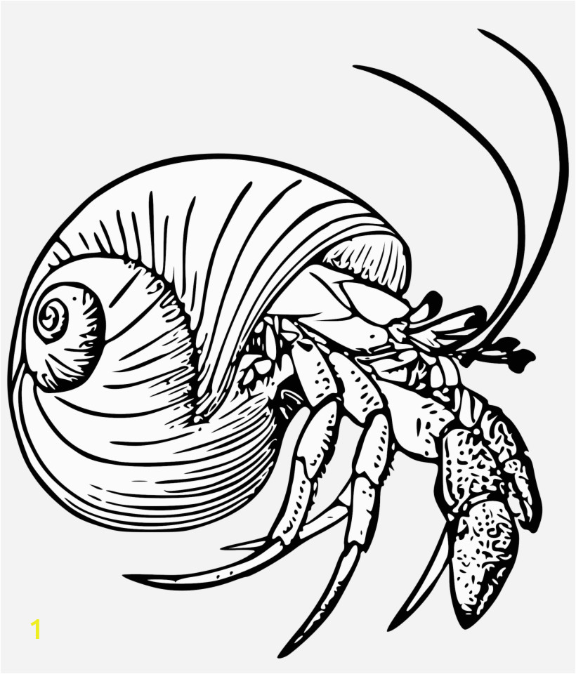 Hermit Crab Coloring Page Eric Carle Graphic Black and White Stock Drawing Crabs Hermit