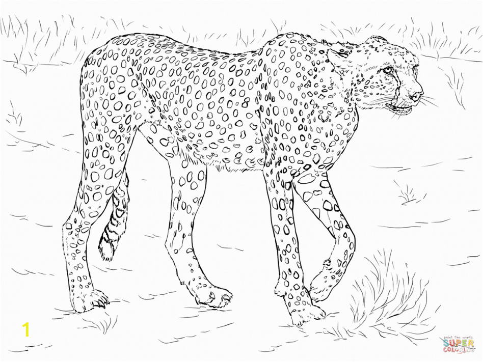 printable realistic animal coloring pages