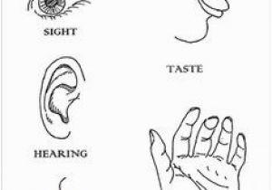 5 Senses Coloring Pages Resultado De Imagem Para the Human Body atividades