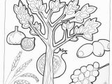 7 Species Of israel Coloring Page 105 Best Images About Tu B Shevat On Pinterest