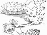 Algae Coloring Pages Advice Algae Coloring Pages Sea Snails Page Free Printable
