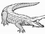 Aligator Coloring Pages Free Printable Alligator Coloring Pages for Kids