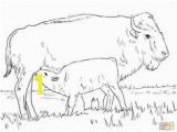 American Bison Coloring Page 240 Best Color Animals Images On Pinterest