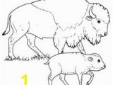 American Bison Coloring Page 285 Best Coloring Pages Images On Pinterest