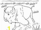 American Bison Coloring Page 43 Best Bison Images On Pinterest