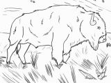 American Bison Coloring Page Bison Coloring Page