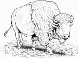 American Bison Coloring Page Free Buffalo and Bison Coloring Pages