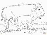 American Bison Coloring Page Realistic American Bison Coloring Page