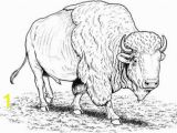 American Bison Coloring Page to See Printable Version Of American Buffalo Bison Coloring