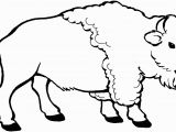 American Bison Coloring Page Young Bison Coloring Page