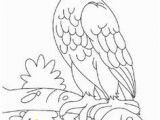 American Kestrel Coloring Page Die 11 Besten Bilder Von Greifvögel