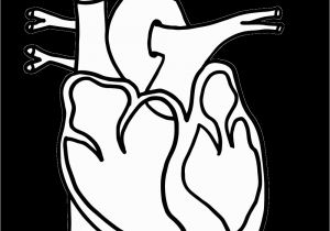 Anatomical Heart Coloring Pages Anatomical Heart Coloring Pages with Anatomy Page Homeschool Science
