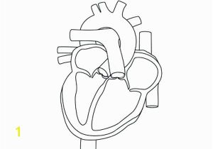 Anatomical Heart Coloring Pages Anatomical Heart Line Drawing at Getdrawings
