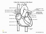 Anatomical Heart Coloring Pages Heart Anatomy Coloring Page